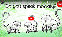 CAN YOU TALK TAMARIN?